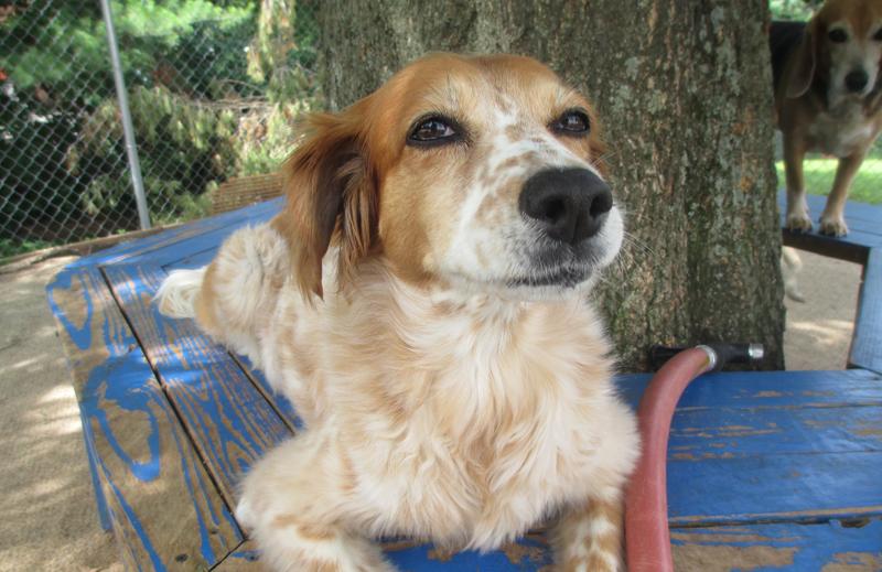 A Happy dog under a shade tree at Crossroads Pet Professionals